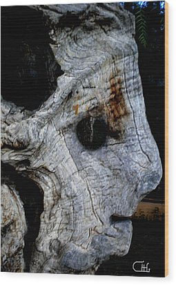 Old Ancient Olive Tree In Spain Wood Print by Colette V Hera  Guggenheim