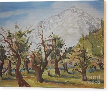 Old Apple Orchard Mt Tom View Wood Print by Pat Crowther