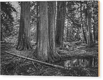 Old Growth Cedar Trees - Montana Wood Print by Daniel Hagerman