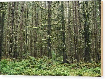 Old Growth Forest In The Hoh Rain Wood Print by Natural Selection Craig Tuttle