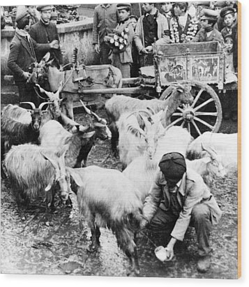 Old Palermo Sicily - Goats Being Milked At A Market Wood Print by International  Images