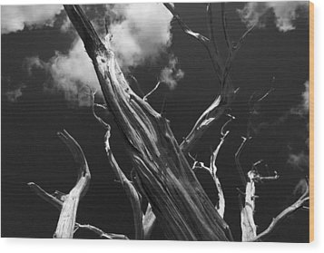 Wood Print featuring the photograph Old Tree by David Gleeson