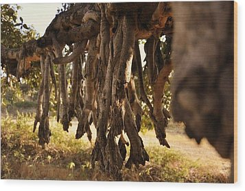 Old Tree Roots Wood Print by Parikshat sharma