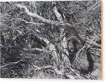 Old Wind Swept Tree Wood Print