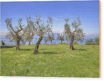olive grove on Lake Gardan Wood Print by Joana Kruse