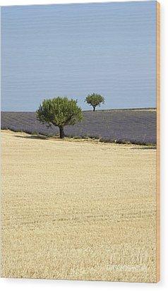 Olive Trees. Provence Wood Print by Bernard Jaubert