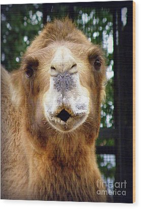 Omar The Camel Wood Print by Lainie Wrightson