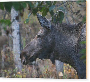 Wood Print featuring the photograph On Alert by Doug Lloyd