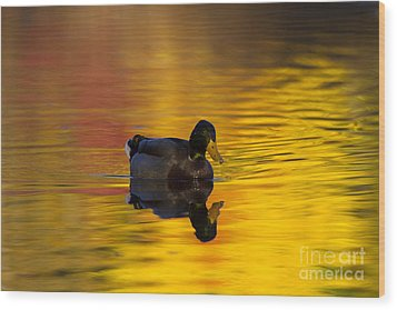 On Golden Waters Wood Print by Mike  Dawson