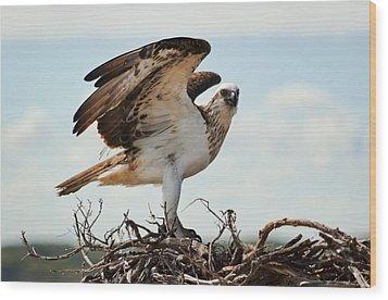 On Guard Wood Print by Heather Thorning