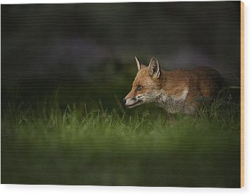 On High Alert Wood Print by Andy Astbury