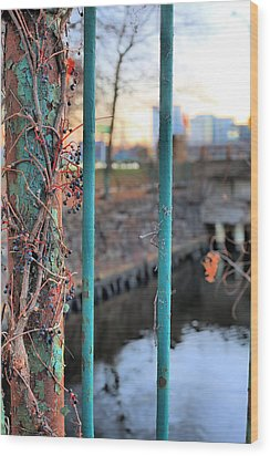On The Fence Wood Print by JC Findley