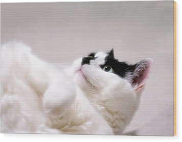 Wood Print featuring the photograph One Belly Rub Please by JM Photography