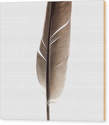 One Feather Wood Print by Bernard Jaubert