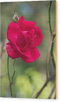 Wood Print featuring the photograph One Rose by Joseph Yarbrough