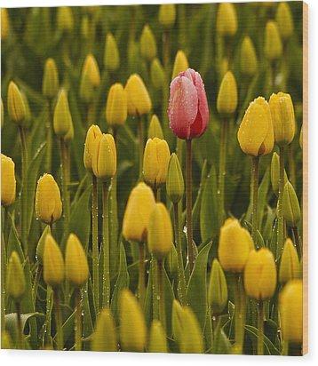One Tulip Wood Print by Tony Locke