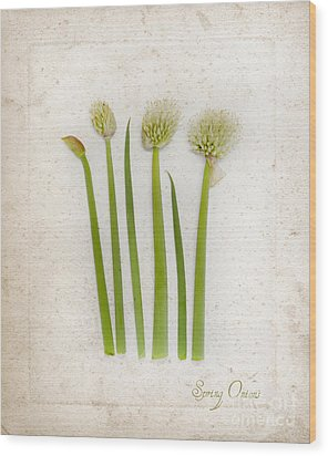 Onion Art Wood Print by Linde Townsend