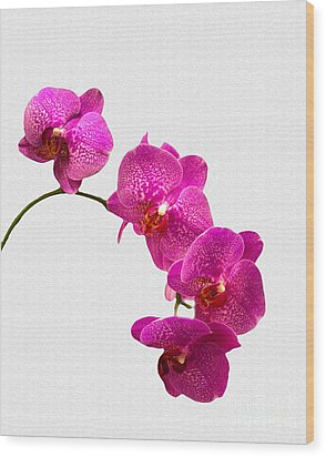 Wood Print featuring the photograph Oodles Of Purple Orchids by Michael Waters