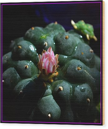 Opening Peyote Flower Wood Print by Susanne Still