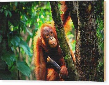 Wood Print featuring the photograph Orang-utan by Lynn Hughes