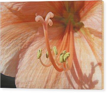 Orange Amaryllis Wood Print by Mary Lane