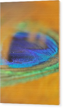Orange And Blue Feather Wood Print by Puzzles Shum