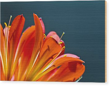 Wood Print featuring the photograph Orange And Blue by Justin Albrecht