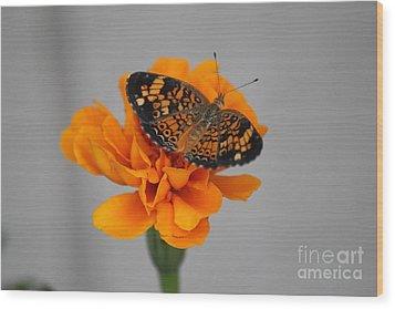 Orange Butterfly 2 Wood Print