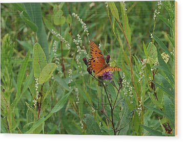 Orange Butterfly Wood Print by Beverly Hammond