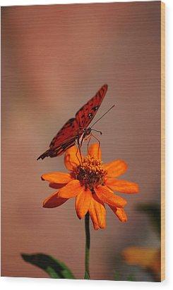 Orange Butterfly Orange Flower Wood Print by Lori Tambakis