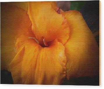 Orange Canna Flower Wood Print by D J Larsen