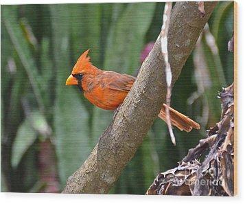Orange Cardinal Wood Print by Carol  Bradley