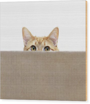 Orange Cat Peeping Out From Cardboard Box Wood Print by Kevin Steele
