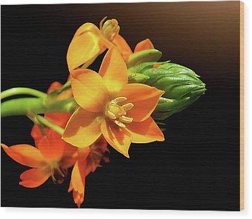 Orange Chincherinchee Wood Print by Gitpix