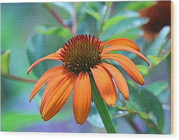 Orange Coneflower Wood Print by Becky Lodes