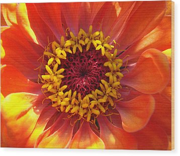 Wood Print featuring the photograph Orange Daisy by Ronda Broatch