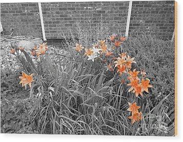 Orange Day Lilies. Wood Print by Ausra Huntington nee Paulauskaite