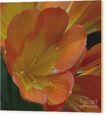 Orange Delight Wood Print by Robert Pilkington