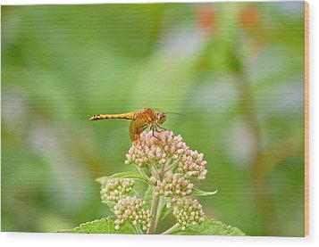 Orange Dragonfly Wood Print by Mary McAvoy