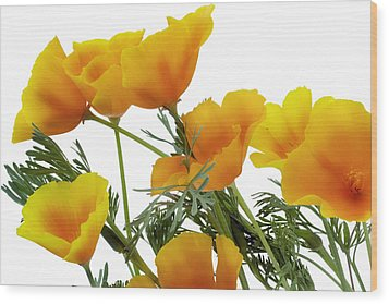 Wood Print featuring the photograph Orange Flower-spark by Aleksandr Volkov