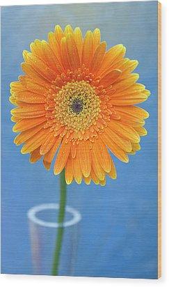 Orange Gerbera Daisy  Propped In Glass Vase Wood Print by Photography by Gordana Adamovic Mladenovic