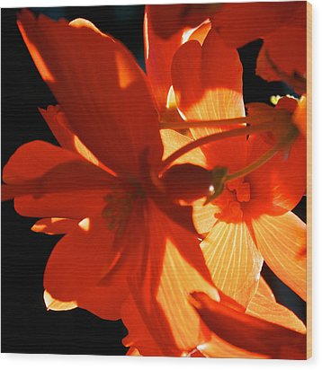 Wood Print featuring the photograph Orange Glow by Trever Miller