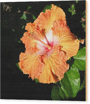 Orange Hibiscus After The Rain 1 Wood Print by Connie Fox