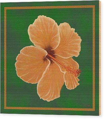 Orange Hibiscus Wood Print by Tim Stringer