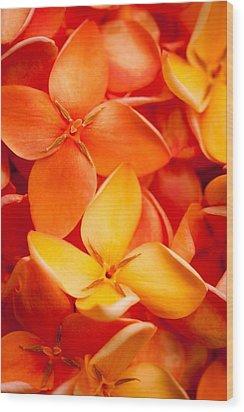 Orange Jungle Flame Flower Wood Print by Johan Larson