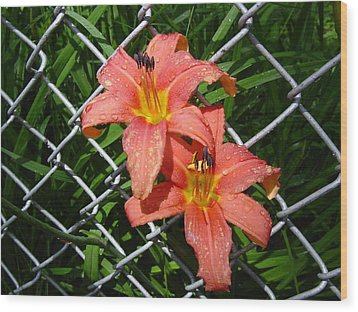 Wood Print featuring the photograph Orange Lilly And Dewdrops by Frank Wickham
