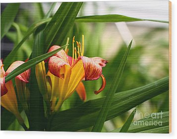 Wood Print featuring the photograph Orange Lily by Denise Pohl