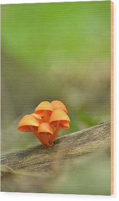 Wood Print featuring the photograph Orange Mushrooms by JD Grimes