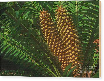 Orange Palm Hearts Wood Print by Herb Paynter