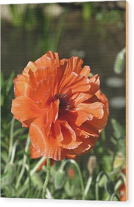 Orange Poppy Wood Print by Rebecca Overton
